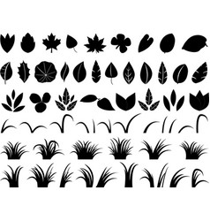 Leafs and grass vector