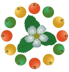 Apples and flowers vector