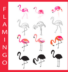 flamingo birds set cartoon outline and vector image