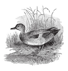 Gray duck vintage vector