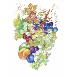 Hand drawn watercolor painting of fruits vector
