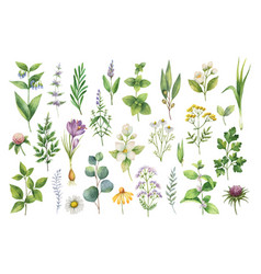 Hand drawn watercolor set of herbs vector