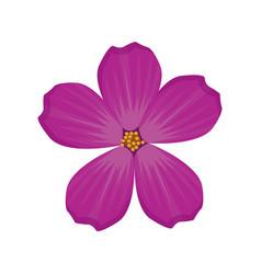 Plumeria flower spring image vector