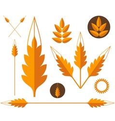 Wheat Design elements vector image vector image