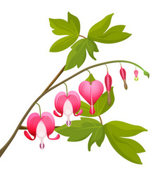 Bleeding heart flowers isolated realistic vector
