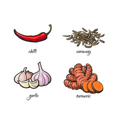 Chili pepper garlic turmeric and caraway seeds vector