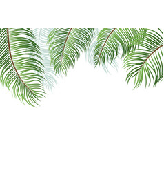 palm leaves isolated on white background vector image