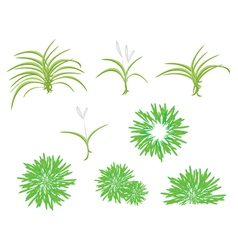 A isometric tree set of dracaena plant vector