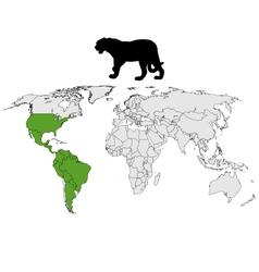 Jaguar distribution vector image vector image
