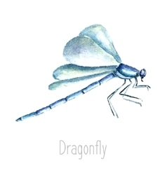 Watercolor dragonfly vector image