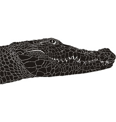 Crocodile head vector