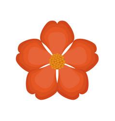 nasturtium flower spring image vector image vector image