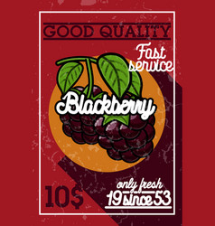 color vintage fruit banner vector image