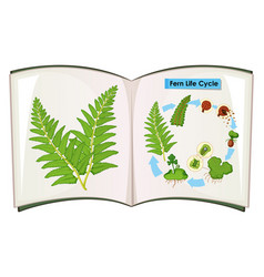 Book of fern life cycle vector