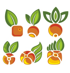 Berry symbols vector
