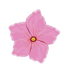 flower geranium florish image vector image