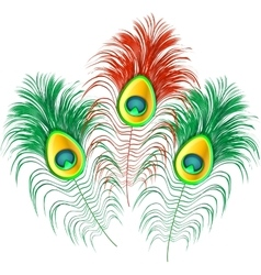 Peacock feathers on white background vector