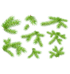 set of green fluffy fir pine branches isolated on vector image