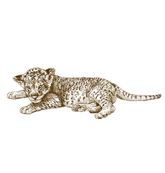 Engraving young lion vector