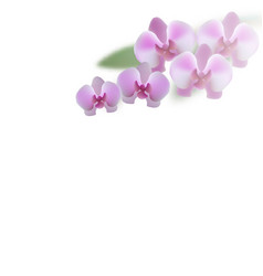 Beautiful purple orchid flowers and leaves vector