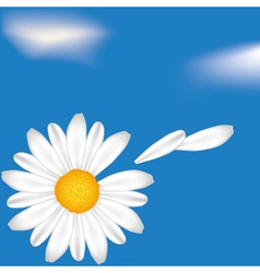 camomile vector image vector image