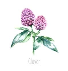Watercolor clover herb vector image