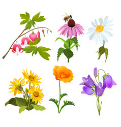 Set of echinacea bleeding heart flowers arnica vector