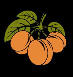vegetarian organic food simple three ripe vector image