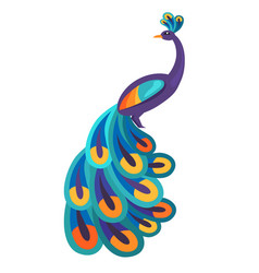 Peacock with bright feathers isolated vector
