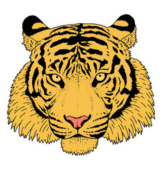 Tiger head vector