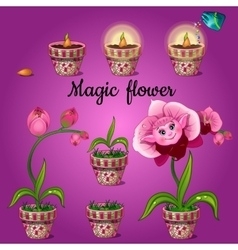 Cultivation stage magic phalaenopsis vector