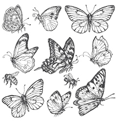 Doodle butterfly vector