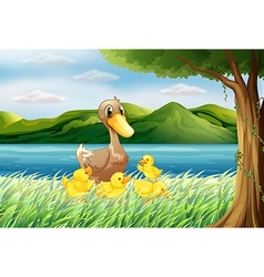 Five ducks at the riverbank vector image vector image
