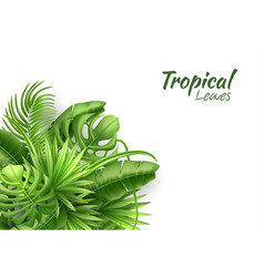 Realistic tropical leaves exotic vacation vector