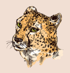 hand-drawn cheetah vector image