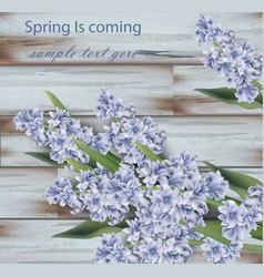lavender bouquet on wood background spring vector image