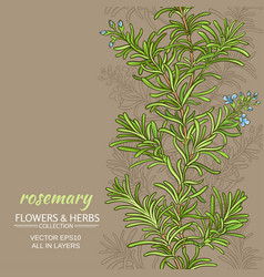 rosemary background vector image vector image