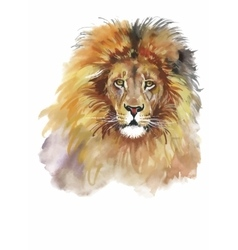 Watercolor lion on a white background vector image vector image