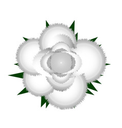 White rose icon vector