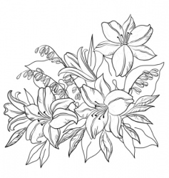 flower lily contours vector image
