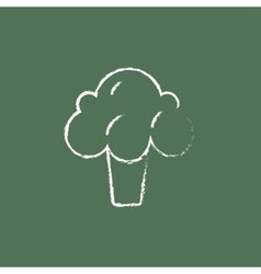 Broccoli icon drawn in chalk vector