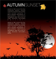 autumn sunset vector image vector image