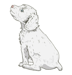 Little puppy on a white background vector image vector image