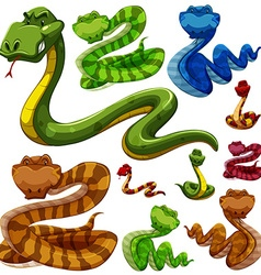 Set of different types of snakes vector image vector image