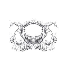 Abstract dotwork horror grunge skull vector