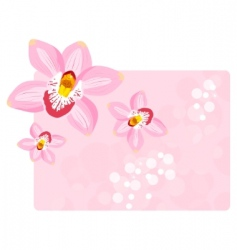 orchids background vector image