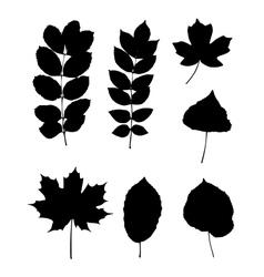 Various leaves vector image