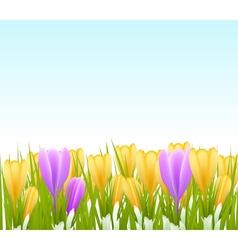 crocus background vector image vector image