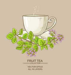 cup of oregano tea vector image vector image