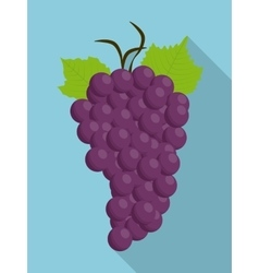 Grapes purple fruit organic food icon vector